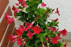 Blume-Garten