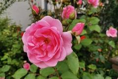 Rose-Kirchohsen