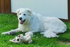 Ânton-Hund