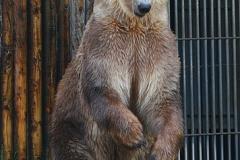 Baer_OS_zoo