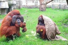 Buschi-Astrid-Zoo-OS
