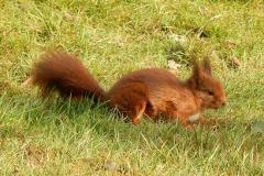 Eichhörnchen-Garten