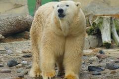 Einbärin-Zoo-am-Meer