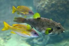 Fische-b
