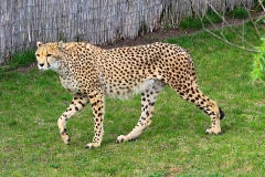 Safaripark - Muttertag 2013