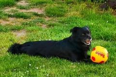 Meilo-Hund