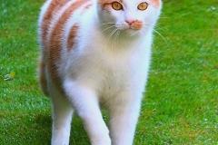 Nachbar-Katze-Schröder