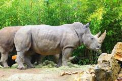 Nashorn-ZooOS