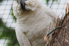 Papagei02-VP-DT