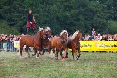 Pferde-Stark-2013