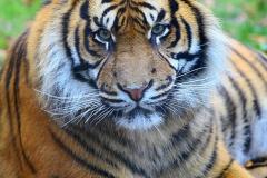 Tiger-Zoo-OS