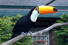Vogelpark-Walsrode01