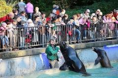 Zoo_OS_Robben02