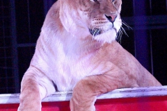 Circus Probst - Programm 2016