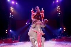 Knie-Elefanten-k